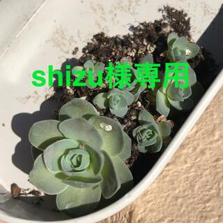 shizu様専用(その他)