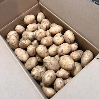ジャガイモ ゴールド 20キロ B品(野菜)