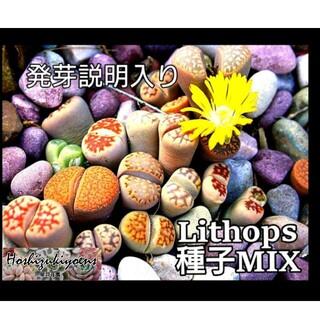 リトープス ミックス種子25粒+α 発芽説明入り(その他)