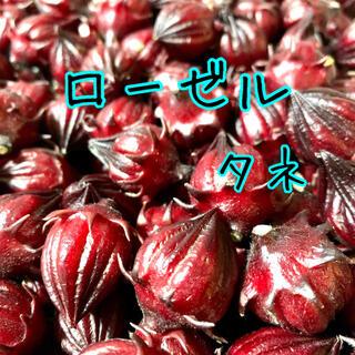 ローゼルの種30粒&ホーリーバジル(その他)
