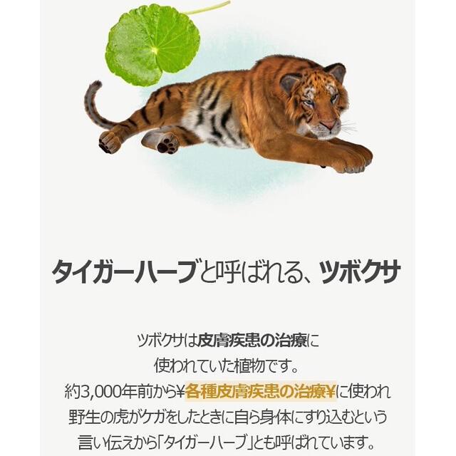 新品◆シカ化粧水◆お得用2倍サイズ×2本セット コスメ/美容のスキンケア/基礎化粧品(化粧水/ローション)の商品写真