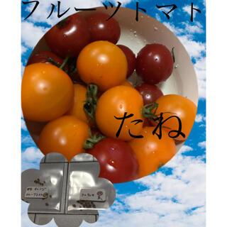 フルーツとまとのタネ2種 フルティカ赤、中玉オレンジ(野菜)