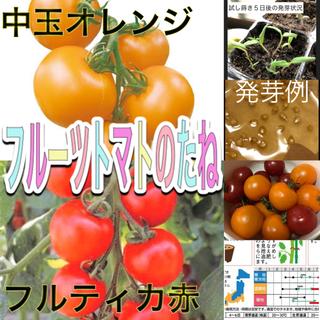フルーツトマトの種 2種セット フルティカ赤 中玉オレンジ(その他)