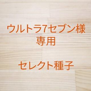 ウルトラ7セブン様専用 セレクト種子 3袋(野菜)