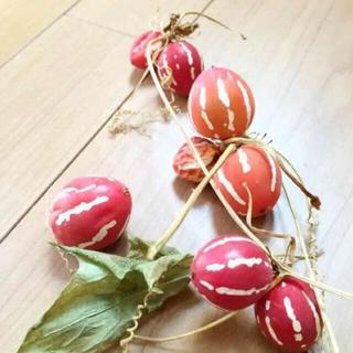 オキナワスズメウリの種 ⭐︎60粒⭐︎(その他)