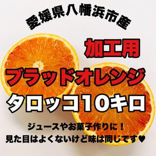 愛媛県八幡浜市産【加工用ブラッドオレンジ】タロッコ10キロ(フルーツ)