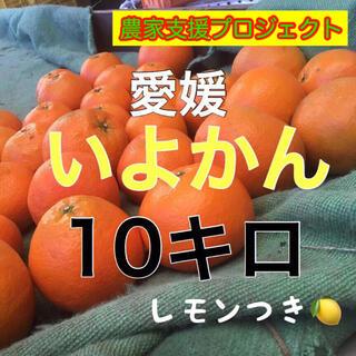 伊予柑10キロ(フルーツ)