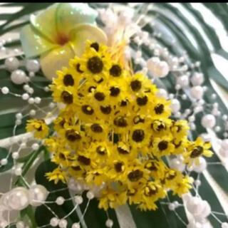 スターフラワーブロッサムひまわりカラー 80輪 ハーバリウム花材(ドライフラワー)