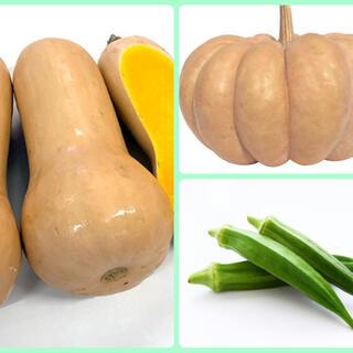 バターナッツ、白皮砂糖南瓜、オクラ種子(野菜)