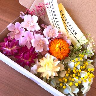 春色 サクラ&ミモザ 花材 アソートボックス(各種パーツ)