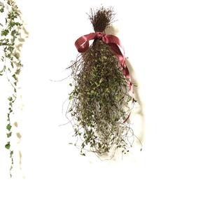 [お値下げ]ワイヤープランツのスワッグ 観葉植物 ナチュラル 自然 素材 G(ドライフラワー)