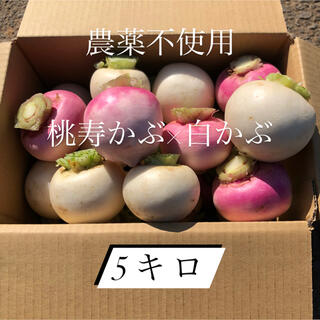 農薬不使用 かぶ2種類 5キロ(野菜)