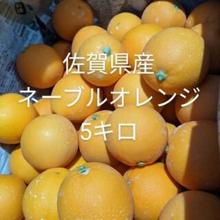 佐賀県産 ネーブルオレンジ5キロ(フルーツ)