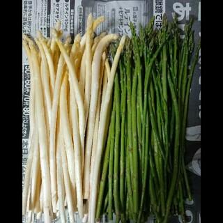 佐賀県産極細ホワイト&グリーンアスパラ1.5キロ(訳あり)(野菜)