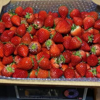 ジャム用いちごさん4kg●いちご苺イチゴ(フルーツ)