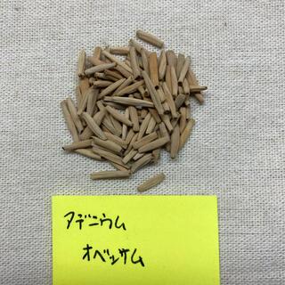 アデニウム オベッサム ミックス種子 15粒(その他)