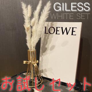 お試し ホワイトセット 白 テールリード パンパスグラス ドライフラワー 花材(ドライフラワー)