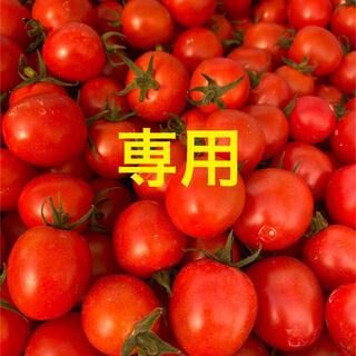 宮崎県産 完熟ミニトマト 2kg(野菜)