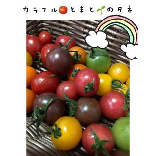 カラフルみにトマトのタネ6種セット(その他)