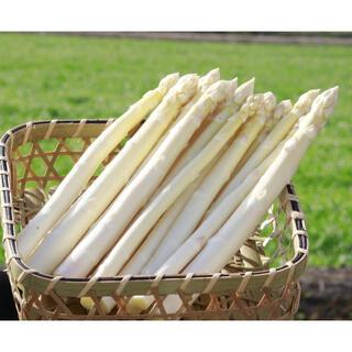 ホワイトアスパラガス 600g(野菜)