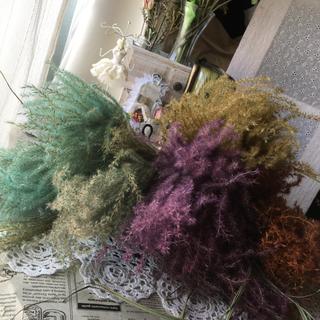 colorススキ ドライフラワー 花材インテリア(ドライフラワー)
