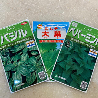 【プランター栽培】大葉100粒、バジル30粒以上、ペパーミント 30粒以上。(その他)