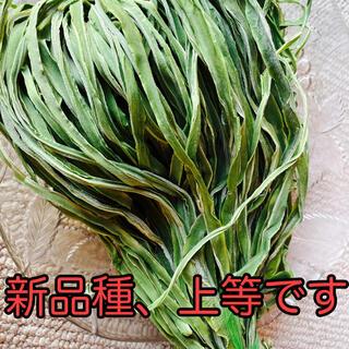 山クラゲ(皇帝菜)新品種 またまた売り切れていましたが到着!(野菜)
