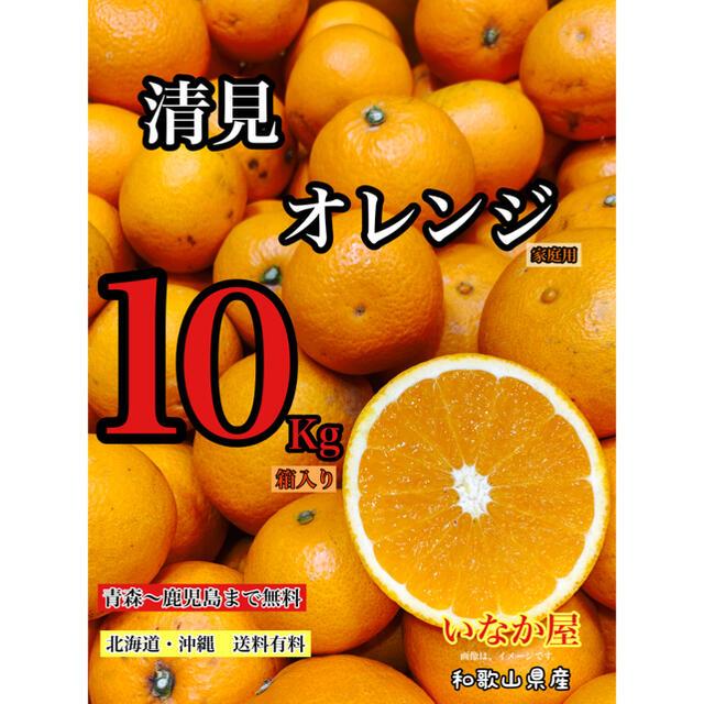 清見オレンジ 家庭用 セール 早い者勝ち 残り1点 食品/飲料/酒の食品(フルーツ)の商品写真