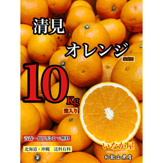 清見オレンジ 家庭用 セール 早い者勝ち 残り1点(フルーツ)