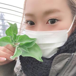 農薬・化学肥料不使用の野菜セット お試し8品60サイズ(野菜)