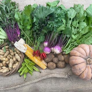 農薬・化学肥料不使用の野菜セットM 8〜10品(野菜)