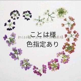 【No.1】全カラー アリッサム +α 素材 押し花 ドライフラワー(ドライフラワー)