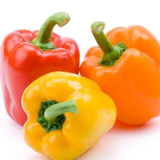 パプリカ 種 3色 50粒(野菜)