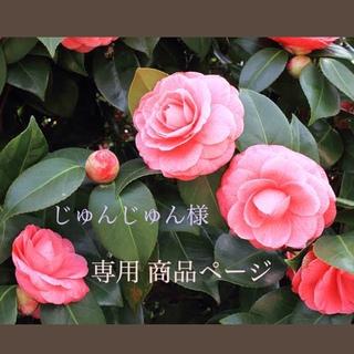 ザセム(the saem)のザセム the SAEM Gold Snail Wrinkle Plumper(美容液)