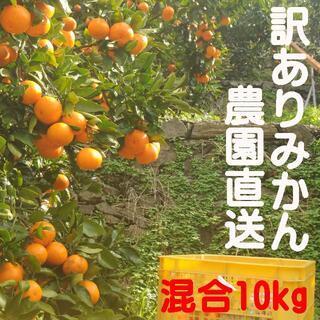 蔵出しみかん♪下津産 混合10kg訳あり品 和歌山県から農園直送!(フルーツ)