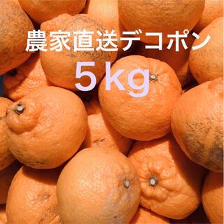 濃い味柑橘 デコポン中玉5kg    愛媛県産 農家直送 ご家庭用(フルーツ)