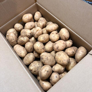 ジャガイモ ゴールド 10キロ  B品(野菜)
