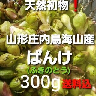 山形産 天然雪割ふきのとう約300g 春野菜 山菜 蕗の薹 天ぷらに