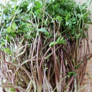 天然山菜 芹 ゆうパケットいっぱい400g以上(野菜)