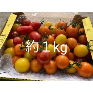 トマト ミニトマト カラフルトマト アイコ 群馬県産 甘い(野菜)