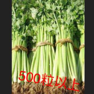 パクチーとセロリの種2点セット各500粒以上(野菜)