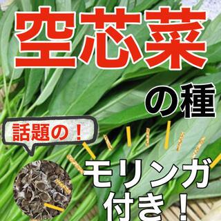 【アジア野菜の定番‼️】オマケ付 空芯菜の種 5ml エンツァイ 野菜 空心菜(野菜)