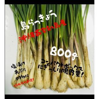 大好評! ここだけ!【恋島 古宇利島】島らっきょう800g!!(野菜)