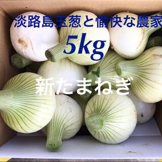 淡路島 新玉ねぎ 5kg 新たまねぎ 新玉葱 新タマネギ(野菜)