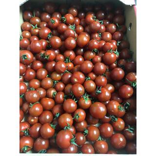 熊本県ミニトマト1kg入り(野菜)