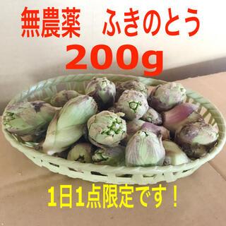 埼玉県産 無農薬 ふきのとう 蕗の薹 200gオーバー(野菜)