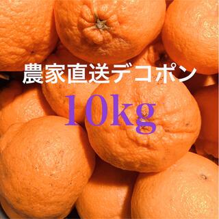濃い味柑橘 デコポン中玉10kg    愛媛県産 農家直送 ご家庭用