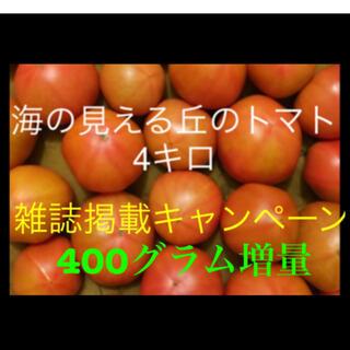 海の見える丘のトマト4キロ☆400グラム増量(野菜)