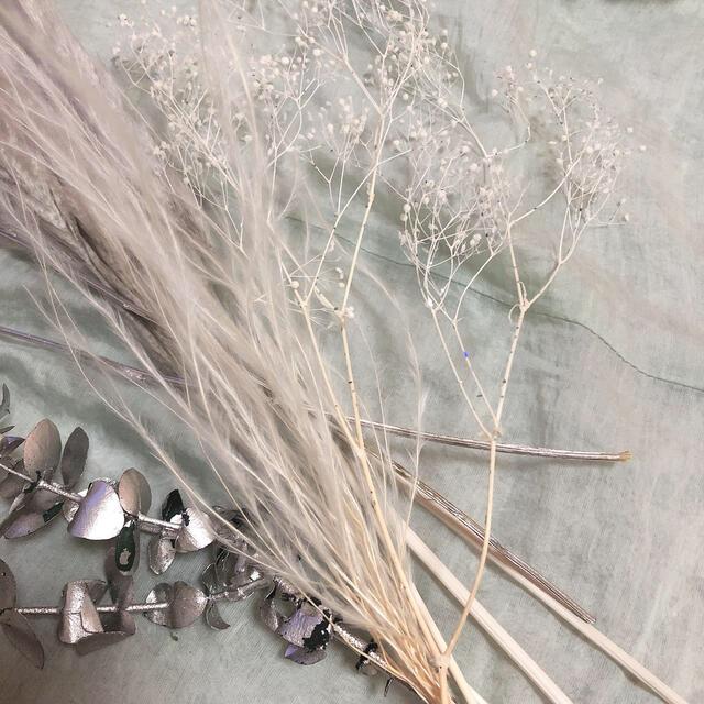 大人気 パンパスグラス テールリード 花材 ウェルカムスペース インテリア  ハンドメイドのフラワー/ガーデン(ドライフラワー)の商品写真