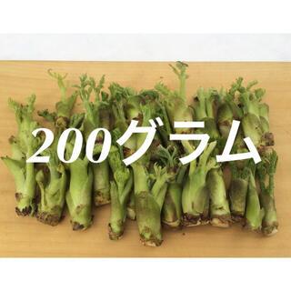 山形県産 タラの芽 水耕栽培 200グラム(野菜)